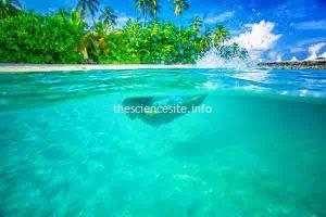 Report Suggests Marine Reserves Enhance Environment